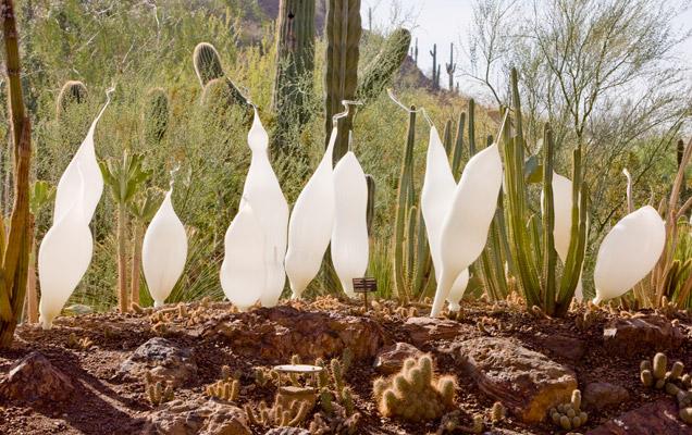 0009_Desert_Botanical_Garden_TR